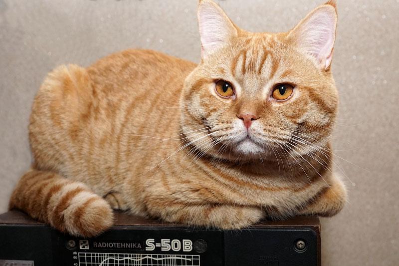 Корм Brit Care для кошек: отзывы и обзор состава | Сайт